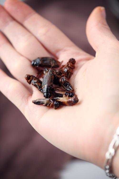 insectes3 copie